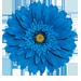 Photo of a blue daisy